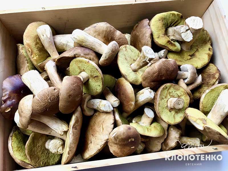 белые грибы для заготовки на зиму